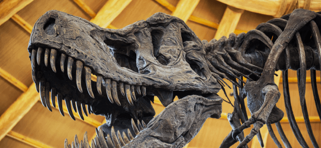 Uncovering The Facts Behind the Discovery of Dinosaur DNA