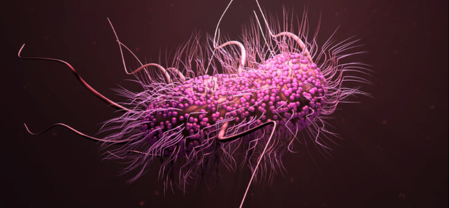 3d illustration E. coli bacteria